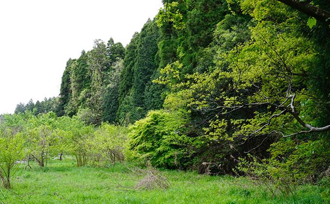 有野実苑オートキャンプ場 野鳥の森