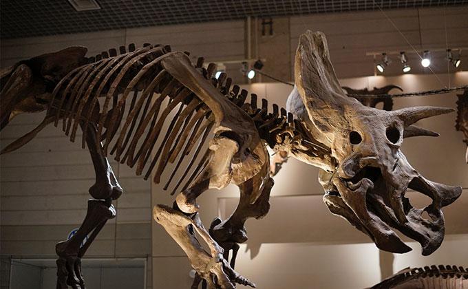 東京 上野国立博物館に行ってきました!迫力満点の化石