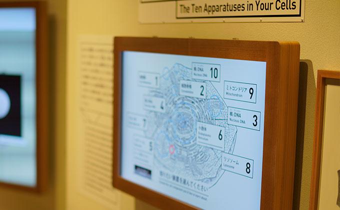 日本科学未来館最先端の医療、iPS細胞を知る展示